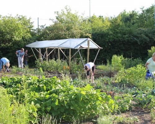 Der Garten wird bunt